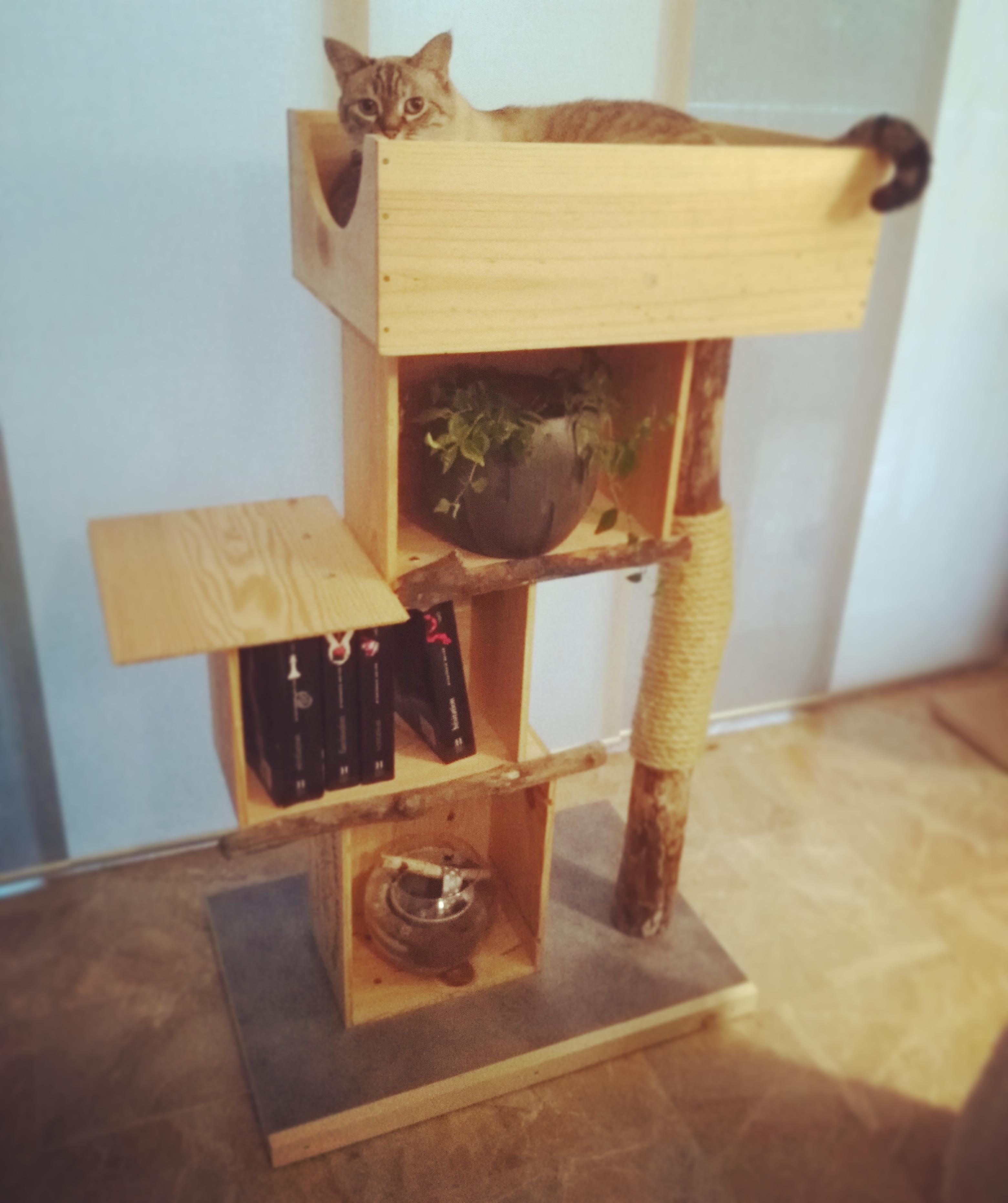 arbres chats abz design annecy. Black Bedroom Furniture Sets. Home Design Ideas